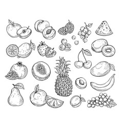 Sketch fruits strawberry melon peach mango vector