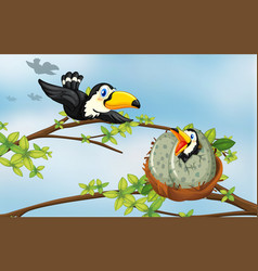 toucan birds on the nest vector image
