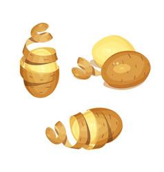 potatoes with peel vegetable vector image