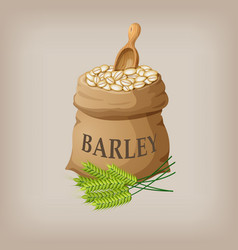 barley grain seed in the bag vector image