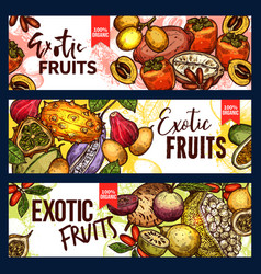 Exotic fruit and tropical berry sketch banner vector