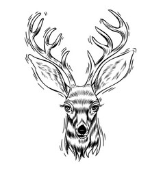 Hand drawn portrait deer vector