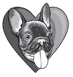 monochromatic cute puppy pug on a white background vector image