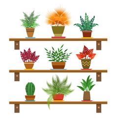 office plants on shelves vector image