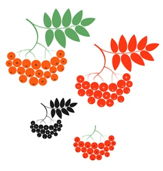Rowanberry vector