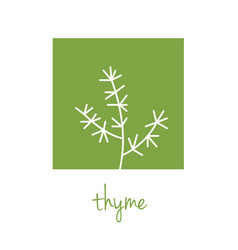 Thyme icon on green square vector
