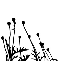 wild plant and flower silhouettes vector image vector image