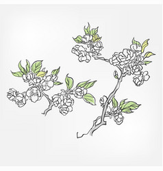 Blooming apple japanese paint style design sketch vector