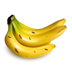 Bunch ripe bananas isolated on white vector