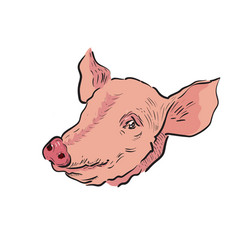 Color sketch pig vector