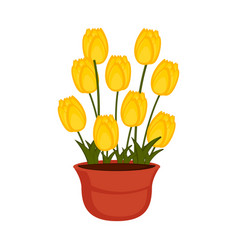 Isolated flower pot with tulip flowers vector
