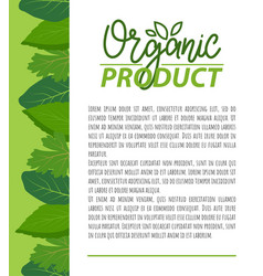 Organic product natural nutrition food on poster vector