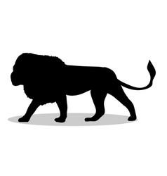 lion predator black silhouette animal vector image