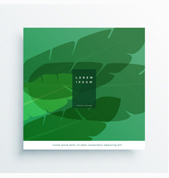 banana leaves card design vector image