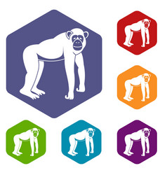 Chimpanzee icons set hexagon vector