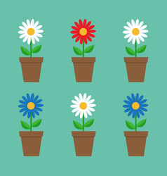 daisy chamomile in pot cute flower plant vector image