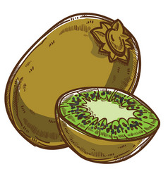 Kiwi tropical fruit sliced part healthy eating vector