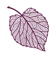 Autumn linden leaf vector