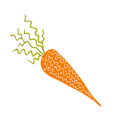 Line art root vegetable hand drawin carrot vector