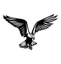 bird of prey in flight vector image