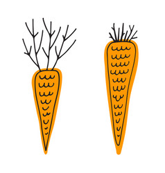 Two doodles carrots hand drawing cartoon food vector