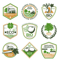 colorful organic eco emblems collection vector image vector image