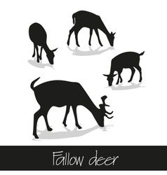 feeding fallow deer silhouette of animal icons vector image