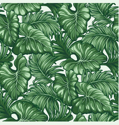 tropical monstera and palm leaves vector image
