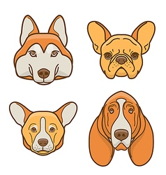 Dog faces of various breeds vector image
