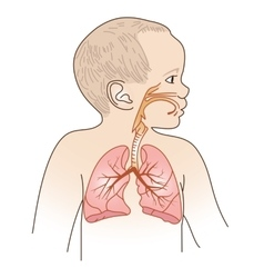Child Respiratory Scheme vector image