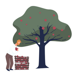 Picking ripe apples from tree male with fruits vector