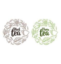 set with lettering black green tea vintage vector image