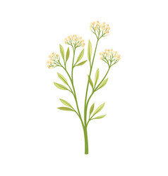 Small beige berries on a stalk vector
