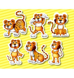 Tigers vector image vector image