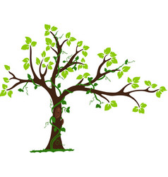 Tree with liana and vine vector image vector image