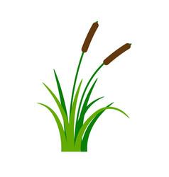 bush bulrush with green grass vector image