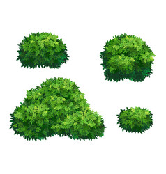 Green bushes and tree crown vector