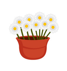 isolated daisies on a flower pot vector image