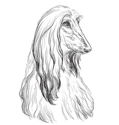 Afghan hound hand drawing portrait vector