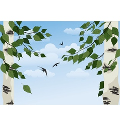 birch on sky background vector image