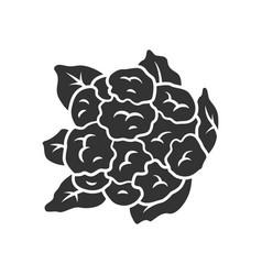 cauliflower glyph icon vector image