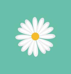 Daisy chamomile flower vector