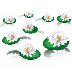 White water lilies vector image