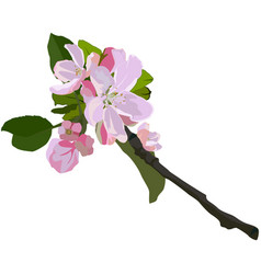 Apple tree branch in blossom isolated vector