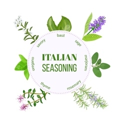 Italian seasoning vector image