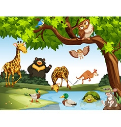 Many wild animals in the park vector image