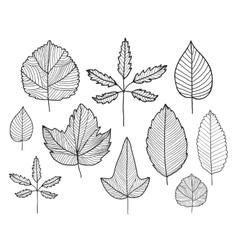 set hand drawn doodle line leaves vector image