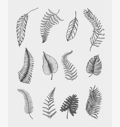 tropical or exotic leaves leaf different vector image