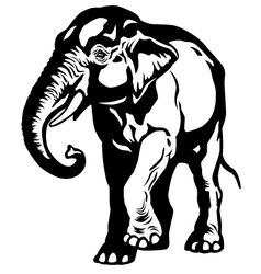Asian elephant black white vector