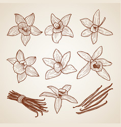 Biology aroma flowers cinnamon vector